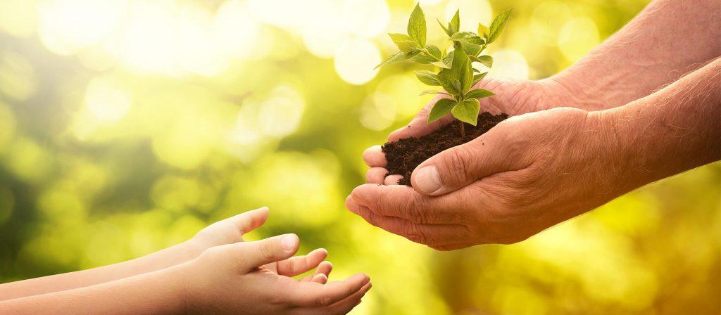 Mann überreicht Kind Pflanze als Symbol für einen nachhaltigen Umgang mit der Natur. Beispielsweise mit einem Umweltmanagementsystem.