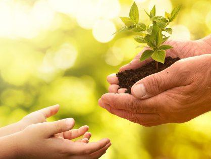 Mann gibt Kind Pflanze in die Hand als Symbol für einen nachhaltigen Umgang mit der Natur. Beispielsweise mit einem Umweltmanagementsystem.
