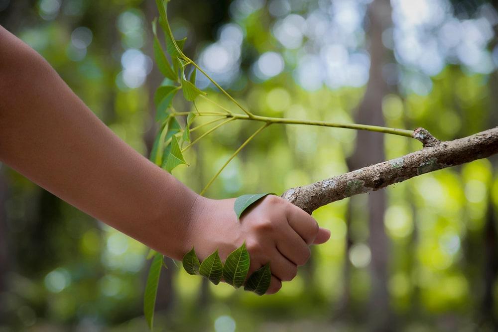 Mensch reicht Baum die Hand als Zeichen für das Erreichen der Klimaneutralität durch professionelles Klimamanagement