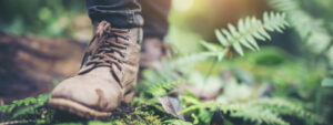 Wanderschuh im Wald